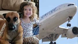 Dog owner blames United Airlines for animal's alleged heatstroke death: 'They literally fried him'