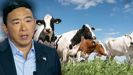 Andrew Yang floats hiking beef prices to 'modify' American diets in bid to address climate change