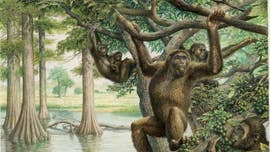 Rare 10-million-year-old fossil unearths new view of human evolution