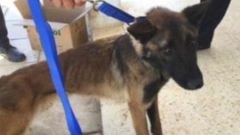 US bomb-sniffing dogs die from neglect in Jordan despite warnings, inspector general probe finds