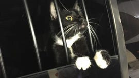 Cat mistaken for burglar, gets 'detained' by police