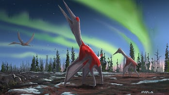 New 'flying dragon of the north' with F-16 sized wingspan discovered by scientists