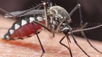 Michigan man went from 'perfectly healthy to brain dead' in 9 days after contracting rare mosquito-borne disease, report says
