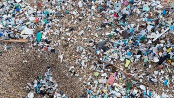 Tampa Bay contains 4 billion bits of microplastic, shocking study indicates