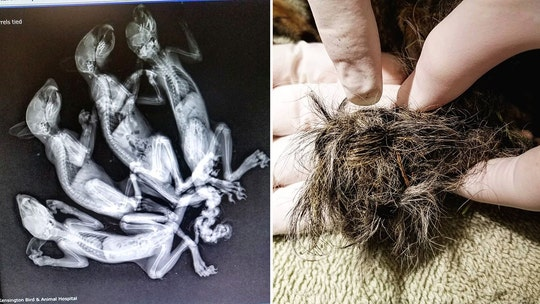 Baby squirrels found on Connecticut train tracks with tails 'braided' together in suspected animal abuse
