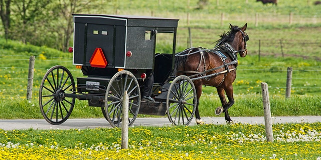 Amish buggies have orange safety triangles on their rear to indicate to other drivers they are slow-moving vehicles.