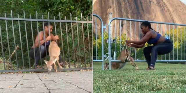 Chloe Dorsey recently documented her efforts to save a deer who got stuck in a fence 鈥� not once, but twice, and in two different fences.