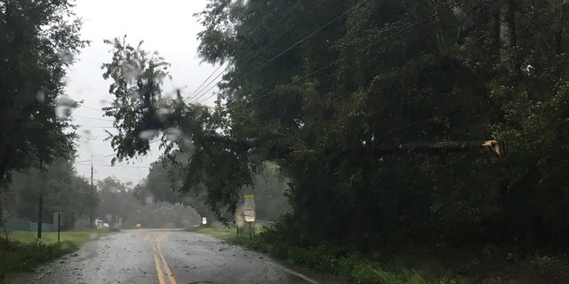 Dorian caused trees to hang over power lines in South Carolina.