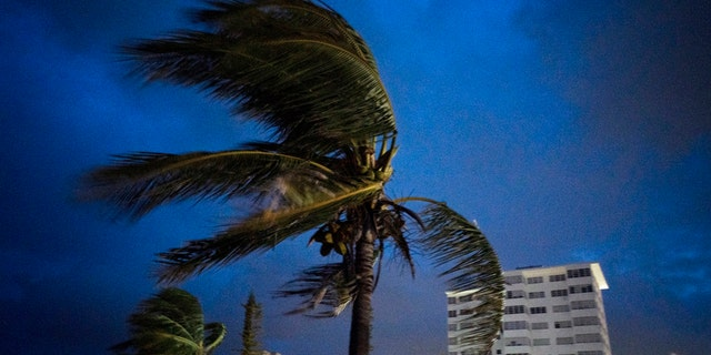 Strong winds move the palms of the palm trees at the first moment of the arrival of Hurricane Dorian in Freeport, Grand Bahama, Bahamas, Sunday Sept. 1, 2019.