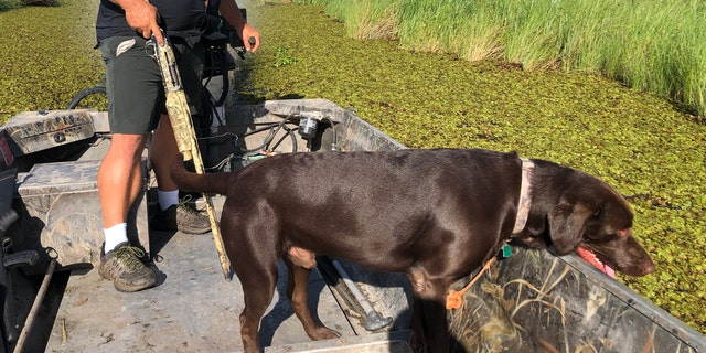 Justin Choate sails through marshland with his chocolate lab, looking for nutira in Pecan Island, La. (Fox News/Charles Watson)