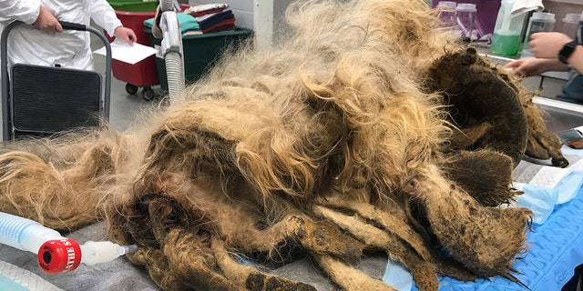"Last Friday, the animal rescue shared the sweet comeback story following ""the worst"" need for a haircut they'd ever seen to Facebook, where it has since gone viral with over 4,000 likes and more than 1,000 shares."