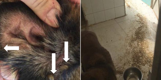 An explosive detection canine became infested with ticks (left), and another canine, Athena, lived in a kennel covered in dirt and feces, without fresh water (right). (U.S. State Department Office of Inspector General)