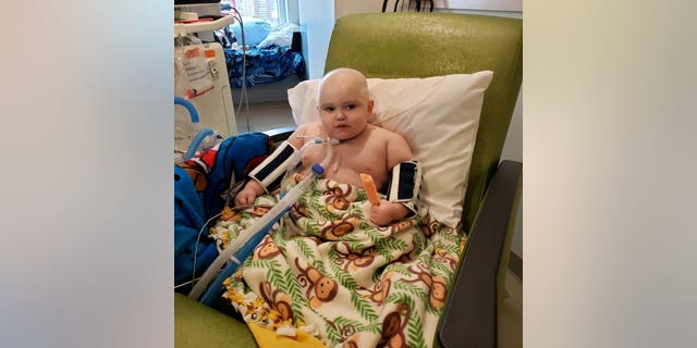 Banner Sears after chemo.