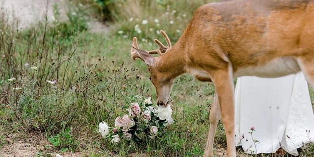 Westlake Legal Group deer-wedding-3-Laurenda-Marie-Photography Deer photo-bombs wedding pictures, eats bride's bouquet Michael Hollan fox-news/lifestyle/weddings fox-news/great-outdoors fox news fnc/lifestyle fnc article 112b45db-3fba-59f9-a57a-225d46472058