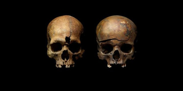 Skulls from a mass grave in Yaroslavl, Russia, show traces of violence. (Credit: Institute of Archaeology, Russian Academy of Sciences)