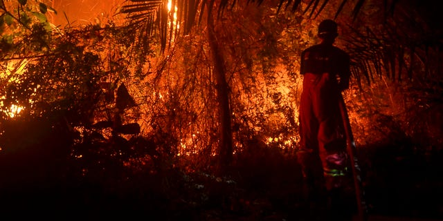 TOPSHOT - This picture taken on September 19, 2019 shows firefighters battling a forest fire near Pekanbaru, Riau. Indonesia is battling forest fires causing toxic haze across southeast Asia with aircraft, artificial rain and even prayer, President Joko Widodo said during a visit to a hard-hit area. (Photo by Wahyudi / AFP) (Photo credit should read WAHYUDI/AFP/Getty Images)