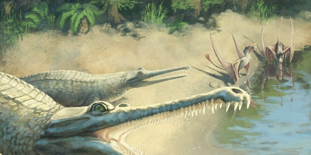 The now-extinct species, which lived in tropical waters during the Jurassic period, was more than 13 feet long. It had a long snout and pointed teeth and preyed on fish. (Credit: SWNS)
