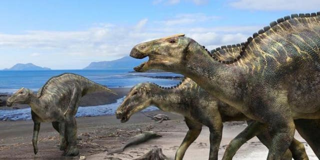 Westlake Legal Group new-duck-billed-dino-scientific-reports New duck-billed dinosaur, Kamuysaurus japonicus, discovered by scientists fox-news/science/archaeology/dinosaurs fox news fnc/science fnc Christopher Carbone article 88f07028-e11d-5da5-b5b7-e5f7ae439592
