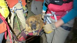 Mastiff injured on Utah hiking trail rescued, carried down on stretcher