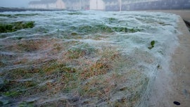 Giant spiderweb confused for frost blankets road verge in Scotland, incredible photos show