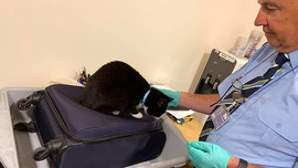 Airport security finds couple's cat stowed away in their luggage