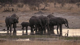 Dozens of elephants starve to death at Zimbabwe national park amid drought