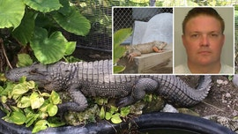 Florida inmate charged with feeding pet iguanas to alligator at sheriff's zoo