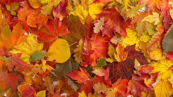 Leaves all over the lawn? Here are the best ways to dispose of them