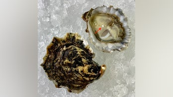 Couple orders oysters on the half shell at New Jersey restaurant, finds 'once-in-a-lifetime' pearl