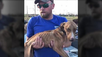 Hurricane Dorian stunner: Bahamas dog survives in rubble for weeks, rescuers say
