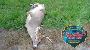 Dead deer found tied up, shot through head by poacher