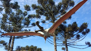 96M-year-old pterosaur nicknamed 'Butch' discovered in Australia