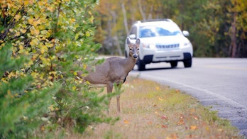 New California law to allow drivers to eat roadkill
