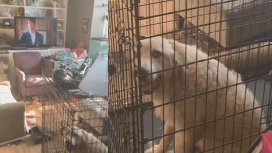 'Deplorable' Florida home leads to arrests; 3 children, more than 240 animals taken