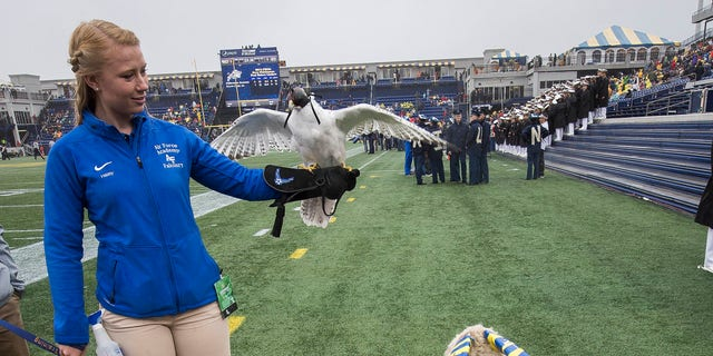 Aurora, Air Force's 23-year-old falcon mascot, died