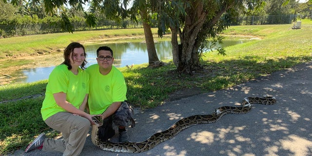 Cynthia Downer and Jonathan Lopez brought in a 98-pound, 10-ounce python from the Big Cypress National Preserve. (Florida Fish and Wildlife Conservation Commission)
