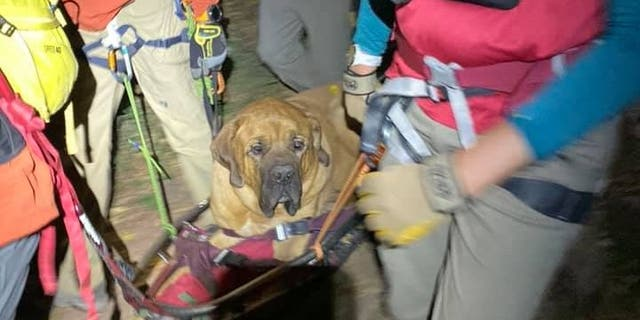 Floyd, a 3-year-old Mastiff, was carried down a hiking trail in Utah on Sunday after becoming injured, rescuers said.