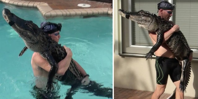 Bedard said he had not rescued an alligator of this size from a pool in more than a year.
