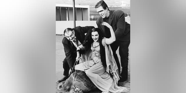 Lily Munster, played by Yvonne De Carlo (1922 - 2007) rides a giant turtle in a publicity still for the comedy-horror TV series 'The Munsters', circa 1965. With her is Al Lewis (1923 - 2006, left) as Grandpa and Fred Gwynne (1926 - 1993) as Herman Munster.