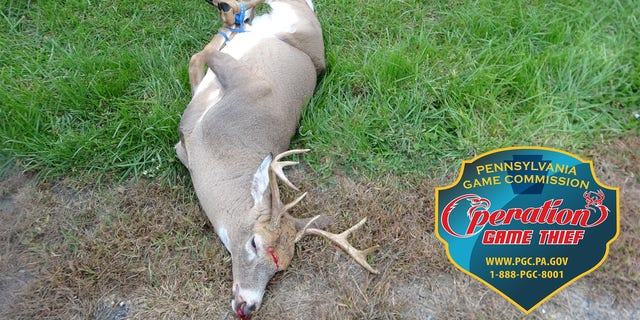 Dead deer found tied up, shot through head by poacher