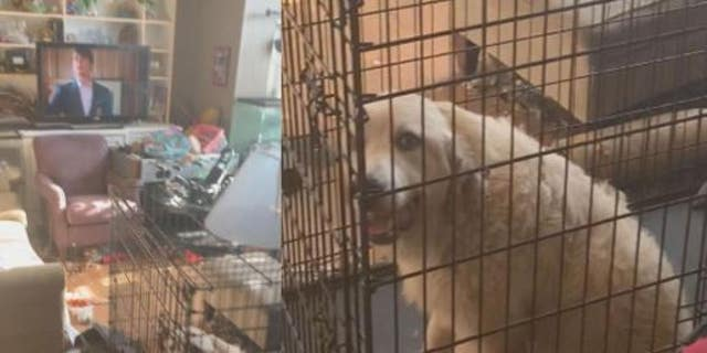 Investigators said 246 animals were removed from a Florida home on Sunday.