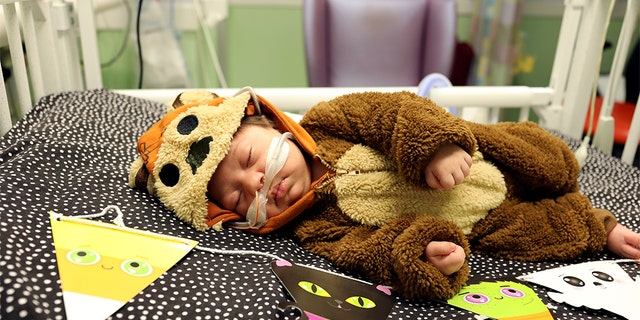 Look at the baby bear! (Cook Children's)