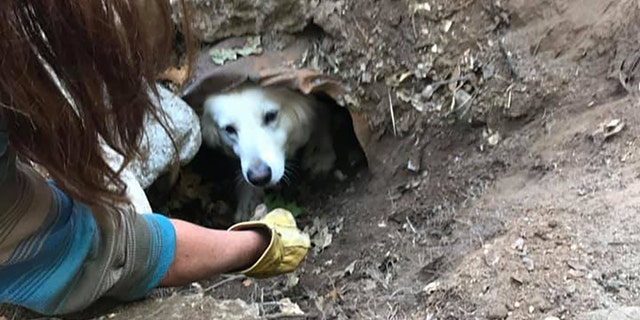 A rescue team coaxed the dog out with treats after dislodging its trapped leg.