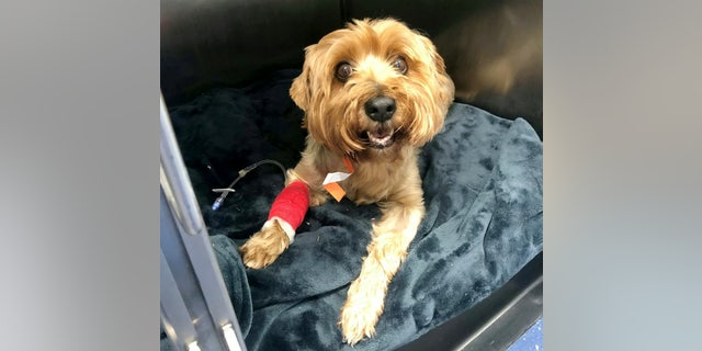 Westlake Legal Group dog-er-kebab-mi-420684 Dog survives after 4-inch BBQ skewer pierces kidney Madeline Farber fox-news/health/healthy-living/pet-health fox news fnc/health fnc article 355d2032-831b-59d3-aa87-4fcd3a1f6c41