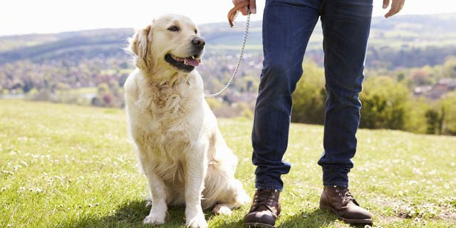 Your Dog May Help You Live Longer
