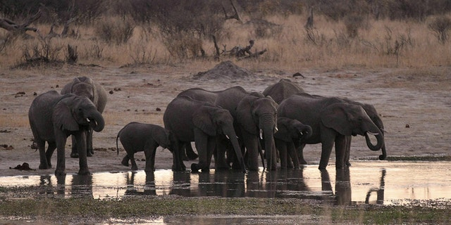 Officials at Hwange said they want to drill more water holes to accommodate an overcrowded elephant population amid the drought, but lack the money to do so.