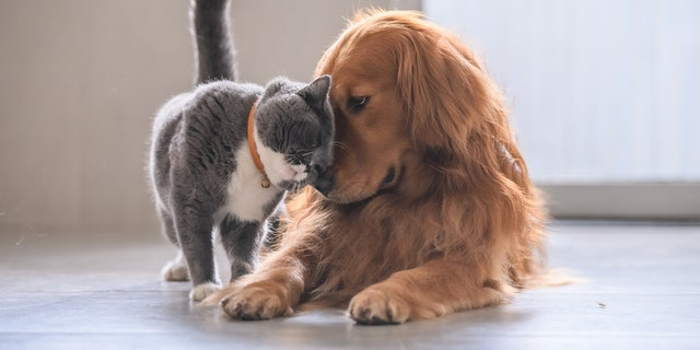 A cute moment was captured between a dog and a kitten, which has gone viral.
