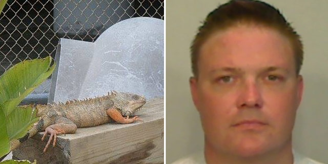Westlake Legal Group iguana-gibson Florida inmate charged with feeding pet iguanas to alligator at sheriff's zoo Stephen Sorace fox-news/us/us-regions/southeast/florida fox-news/us/crime fox-news/science/wild-nature/reptiles fox-news/odd-news fox news fnc/us fnc ec2a1322-dcf3-531a-8997-e9627d34f5b4 article