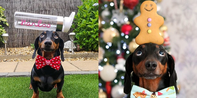 The dog also recently won Northern Ireland's Social Media Personality of a Year – kick several humans for a prize.