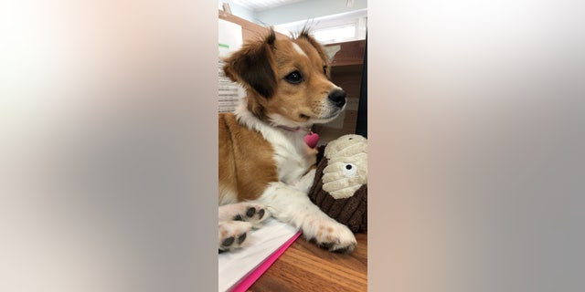 """When we first brought her home, she was a playful biter. Her original name, Honey, didn't fit her at all,"" the dog's new owner said. ""To me, Honey is sweet and she is not."""
